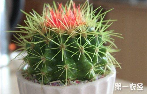 室内植物摆放风水,室内植物摆放禁忌讲究