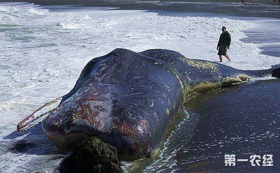 鲸鱼眼睛手绘图片