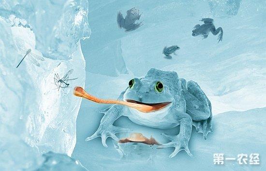 在台湾会产卵泡的都是树娃科的蛙种,这些如台北树蛙,翡翠树蛙,由于