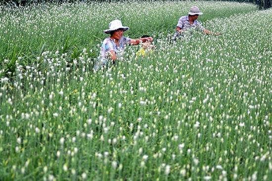 山东沂源3万余亩秋季蔬菜丰收 已上市150多万公斤