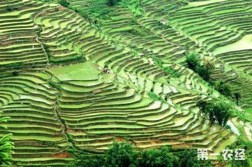 保护农业关键点是种质资源