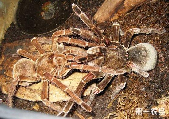 蜘蛛身体结构解图