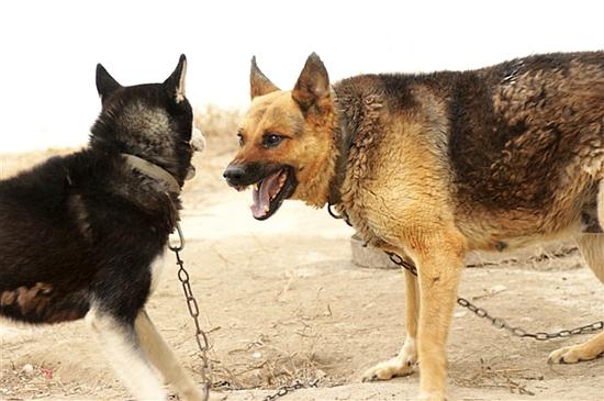 动物塑的泥土窝图片