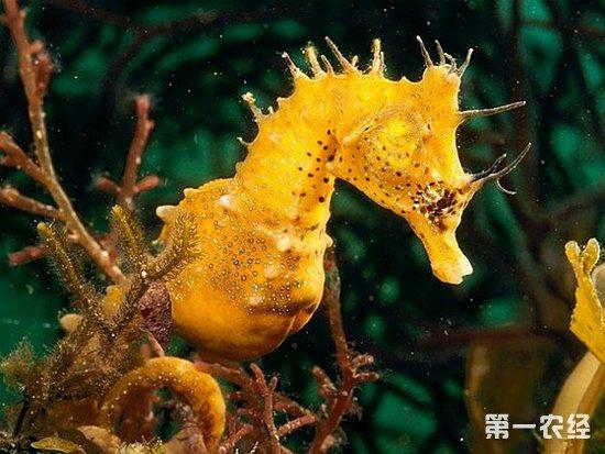 是一种小型海洋动物