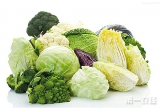 十字花科蔬菜有哪些?