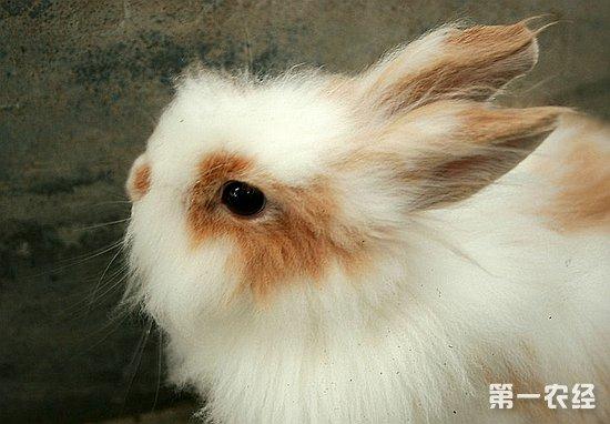 【小编补充】宠物兔实现规模养殖后,就不是一点菜叶和草就可以解决问题的,必须要喂全价饲料,饲料价格各地不一,大多在每斤一元左右,而且宠物兔是一种比较脆弱的小动物,稍不注意就容易生病,规模养殖成活率相对要低些,所以,利润并不像有的人讲的哪么高,一只商品肉兔的利润也就在十块钱左右,还要看你的饲养水平,准备养兔的朋友需慎重,饲养前做好准备工作,多多考查!