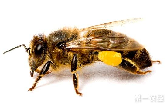 蜜蜂结构示意图