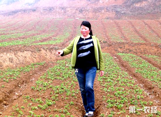 贵州大方羊场镇风景区