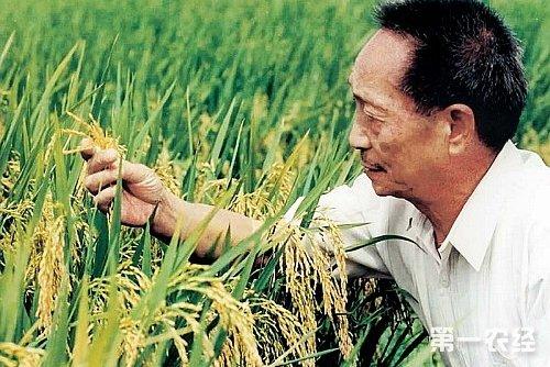 植物杂交育种方法和步骤 - 种植技术 - 第一农经网