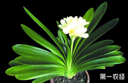 兰花品种有哪些?兰花品种大全