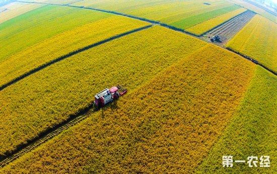蚌埠五河稻田丰收 农机收割超90%_农业资讯_马可资讯