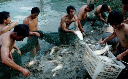 中国水产奇迹:108倍的飞跃