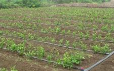 专家热议水肥一体化发展