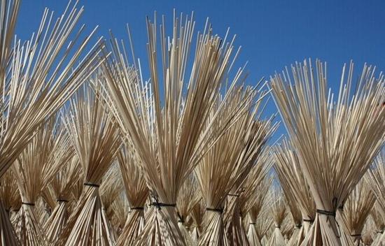 加拿大每年5月播种玉米,一般到10月收获。如果把玉米作喂牛的青贮饲料,那就要提前于9月收割。玉米收割机连玉米秆带玉米穗一起收割,边收割边把玉米穗和玉米秆同时切碎,然后运送到农场储料罐储存,储存期可达一年。10月份玉米已经成熟。收割时,玉米收割机一边收割一边把玉米秆切碎,切碎的玉米秆作为肥料返到田里。
