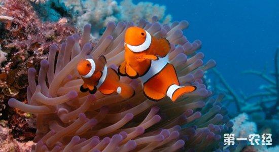 马达加斯加,科摩罗群岛,塞舌尔,安达曼海,苏门答腊岛和千岛群岛一带
