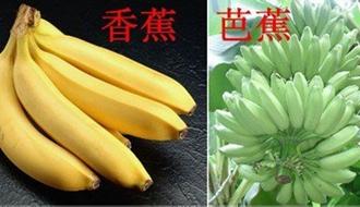 芭蕉和香蕉有什么区别?