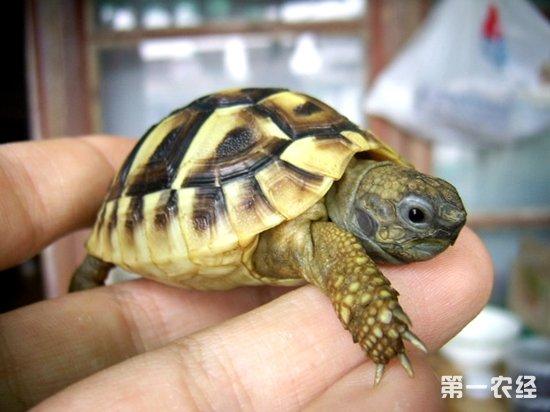 乌龟冬眠情况一览表