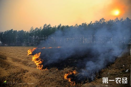 10月,秋季秸秆焚烧再次引发公众热议:该如何利用农业废弃物