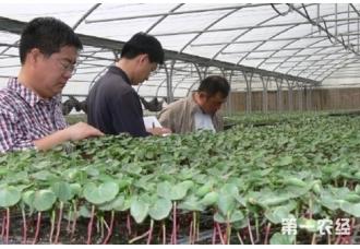 棉花怎么育苗?棉花育苗方法