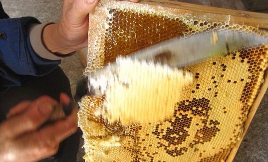喜新厌旧 土蜂蜜带巢卖