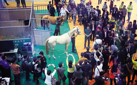 第六届广东现代农业博览会开幕 汗血宝马亮相成亮点