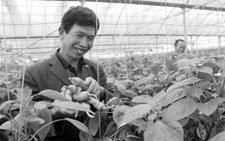 """江西永丰""""蔬菜经济""""惠农10万人"""