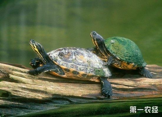 树叶乌龟制作方法