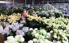 云南泸西:狠抓花卉产业技能培训提质增效