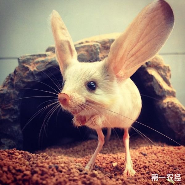 伦敦动物学会的原野保护负责人兼发现这种动物的蒙古