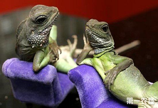青蛙趴的正确步骤