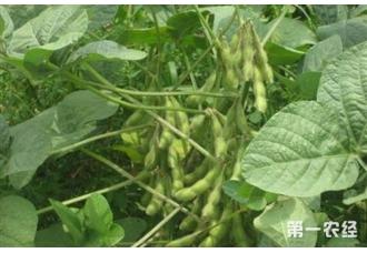 大豆空荚多的原因和解决方法