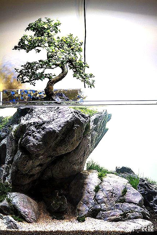 计手册图集 【鱼缸造景】-仿野生龟池设计手册图集