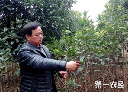 发彩网网站官网:埋头创业二十载 发展现代农业带民富