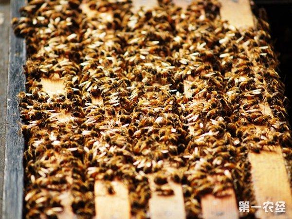 格子蜂箱比圆桶蜂箱更利于人们对蜜蜂的饲喂