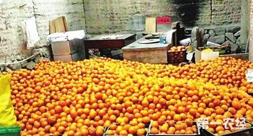 福建宁德丰产脐橙滞销 村民呼吁好心人求援助