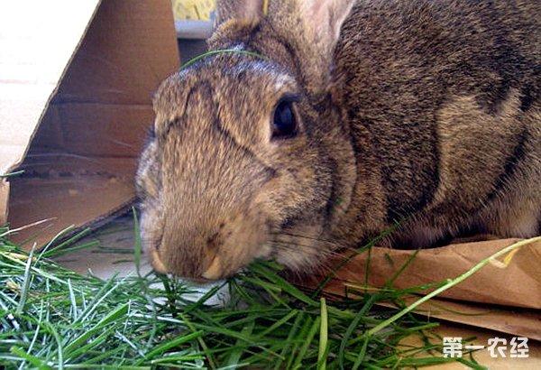 虽然兔子是典型的食草动物