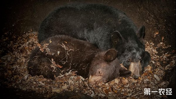 哪些动物要冬眠