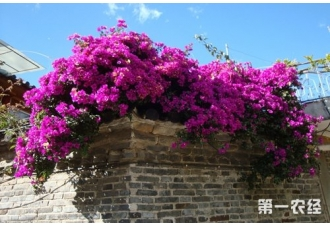 一年四季都盛开的花是什么花?四季盛开的花有