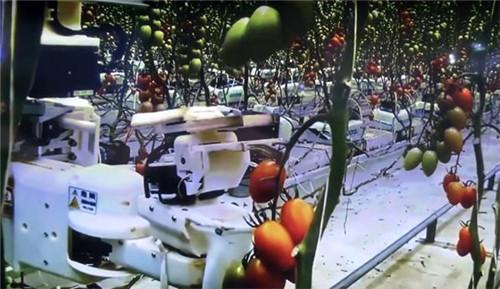 松下的西红柿采摘机器人-日本拟建世界上第一个机器人农场