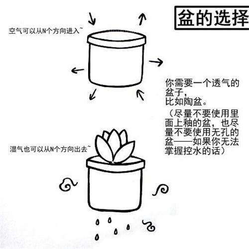 多肉植物移栽方法与步骤【图文详解】_种植业_马可资讯