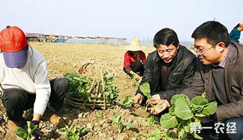 南昌市农科院蔬菜专家在南昌县塔城乡