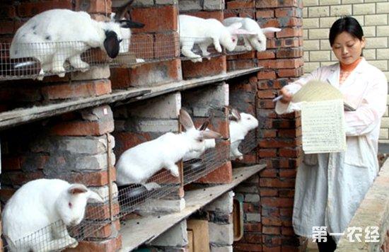 兔子兔子养殖场设计图-【专家解答】   一、选择优良品种:   獭兔是一种皮肉兼用型兔,应选