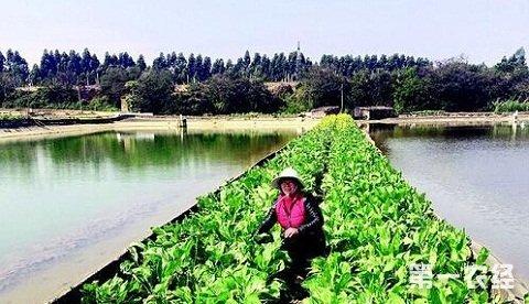 5旬农妇自学鳗鱼养殖   带动乡亲奔致富路