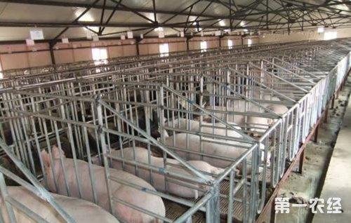 养猪场:多列式猪舍的特点(图片)