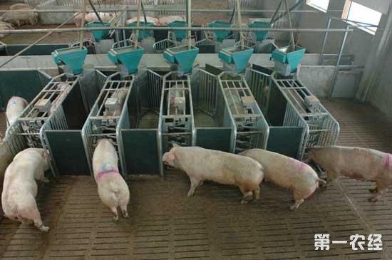 现代猪舍粪便怎么清理