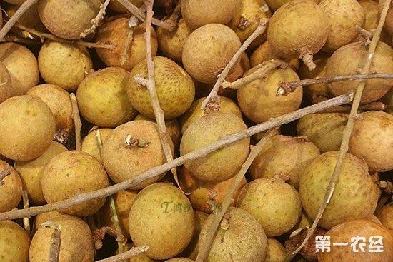 广东湛江赤坎区特产:龙眼荔枝