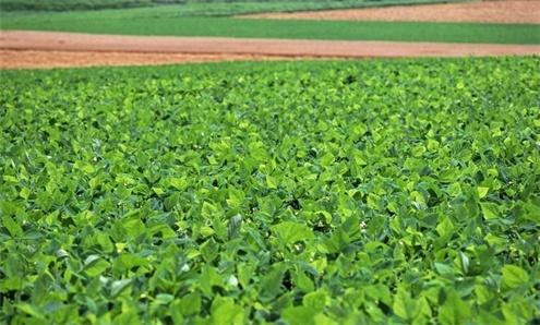 北京顺义:蔬菜秧苗经得起市场考验