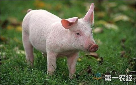 动物的口腔黏膜免疫