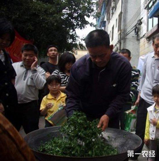 """广东博罗县:山茶成""""摇钱树"""" 1000元/斤"""