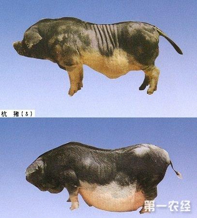 猪全身部位图解